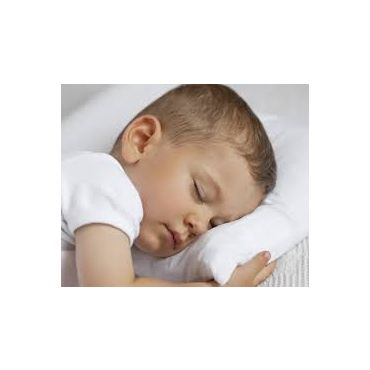 可水洗新西兰羊毛枕(有儿童尺寸)